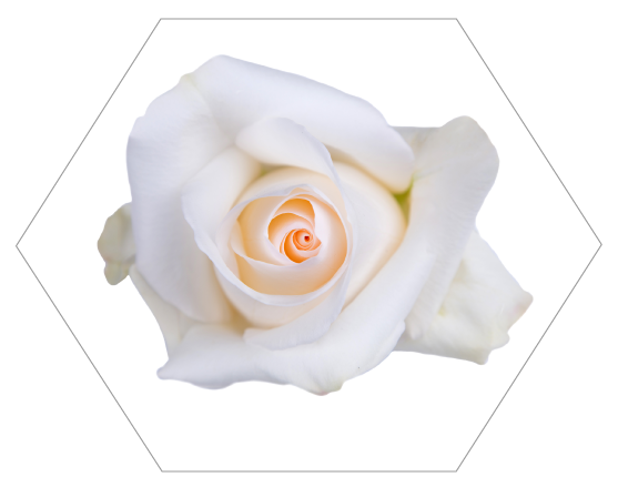 TESSACORP Cream2 Our Varieties