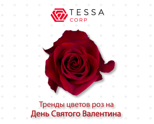 TESSACORP Ecuanrose-blog_enero2.ruso_-1-495x400 Our top rose color trends for Valentine's Trends